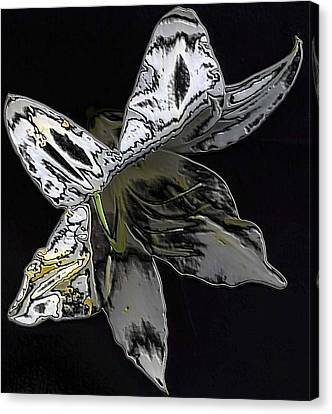 Canvas Print featuring the photograph Butterfly Lily by Carolyn Repka