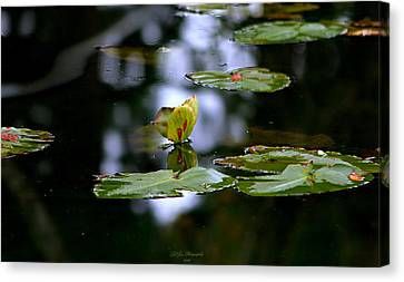 Butterfly Lily Pad Canvas Print by Jeanette C Landstrom