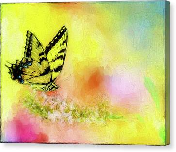 Butterfly Love Canvas Print by Ches Black