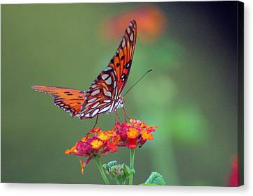 Butterfly Majestic Canvas Print