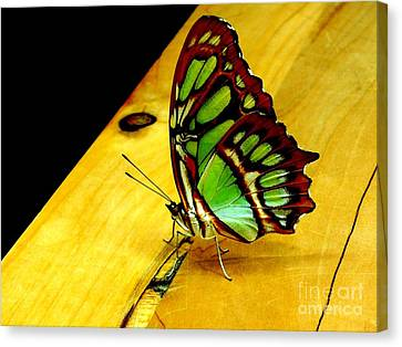 Butterfly Canvas Print by Michael Grubb