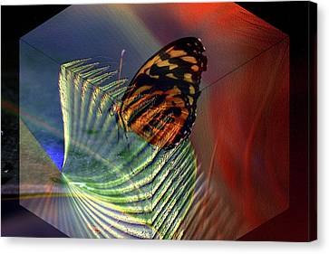 Canvas Print featuring the photograph Butterfly Morphing by Irma BACKELANT GALLERIES