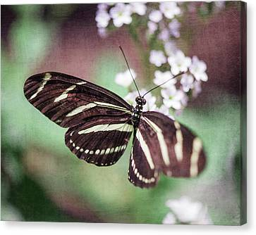 Butterfly Canvas Print by Nastasia Cook