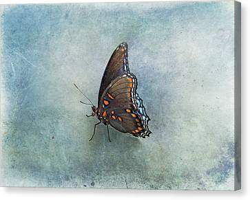 Canvas Print featuring the photograph Butterfly On Blue by Sandy Keeton