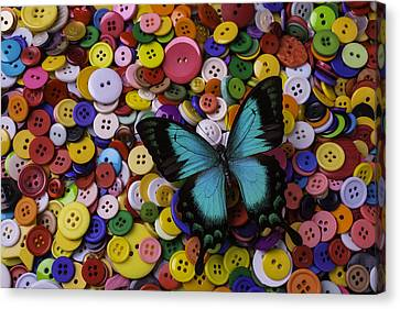 Butterfly On Buttons Canvas Print by Garry Gay