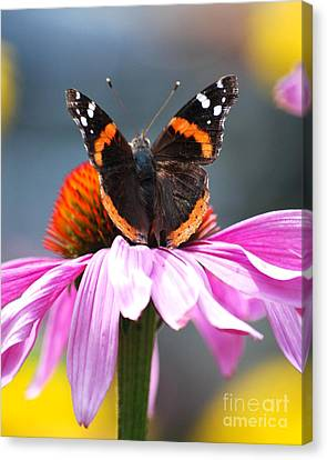 Canvas Print featuring the photograph Butterfly On Cone Flower by Lila Fisher-Wenzel