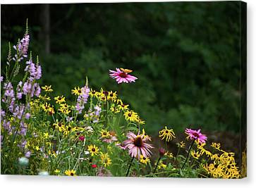 Butterfly On Cone Flower Canvas Print