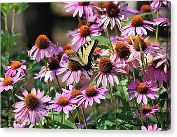 Canvas Print featuring the photograph Butterfly On Coneflowers by Trina Ansel