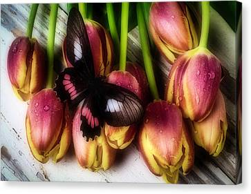 Butterfly On Dewy Tulips Canvas Print by Garry Gay