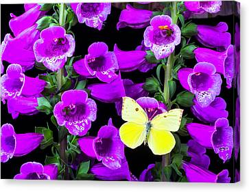 Foxglove Flowers Canvas Print - Butterfly On Foxglove by Garry Gay