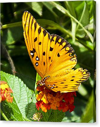 Canvas Print featuring the photograph Butterfly On Lantana by Bill Barber