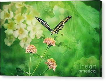 Butterfly On Lantana Montage Canvas Print by Toma Caul