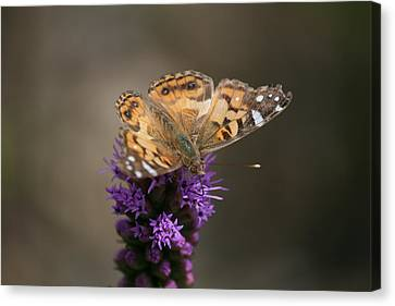 Canvas Print featuring the photograph Butterfly In Solo by Cathy Harper