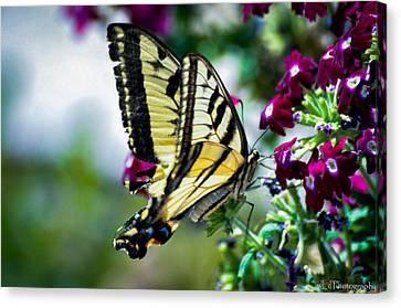 Butterfly On Purple Flowers Canvas Print