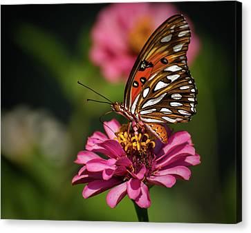 Butterfly Canvas Print - Butterfly On Zinnia by Zina Stromberg