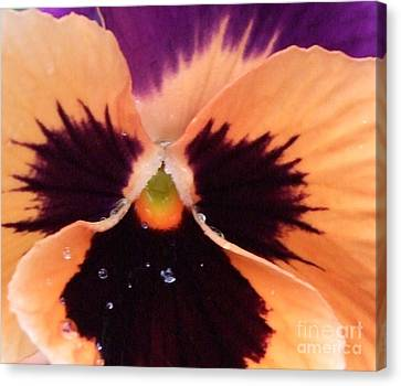 Butterfly Pansy Canvas Print by Deborah Brewer