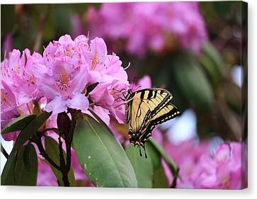Butterfly Paradise Canvas Print by Rick Morgan