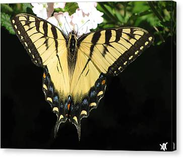 Butterfly Points Canvas Print by Debra     Vatalaro