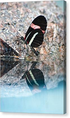 Butterfly Reflection Canvas Print by Cheryl Cencich