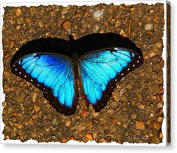 Butterfly Shadow Canvas Print by Judy  Waller