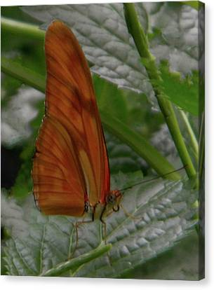 Canvas Print featuring the photograph Butterfly Smile by Manuela Constantin