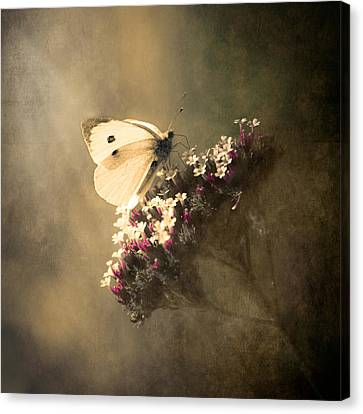 With Canvas Print - Butterfly Spirit #01 by Loriental Photography