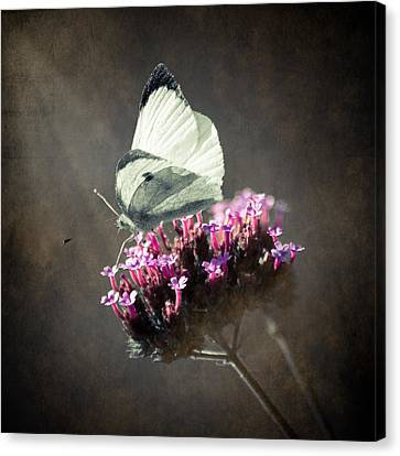 Butterfly Spirit #02 Canvas Print by Loriental Photography