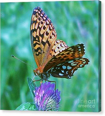 Butterfly Stare Canvas Print by Emily Michaud