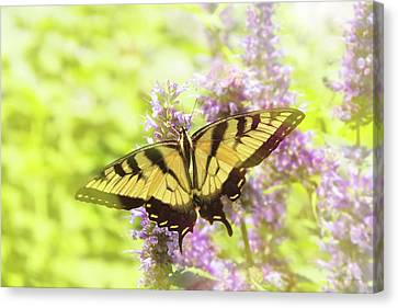 Butterfly - Swallowtail - Hard To Swallow Canvas Print by Mike Savad