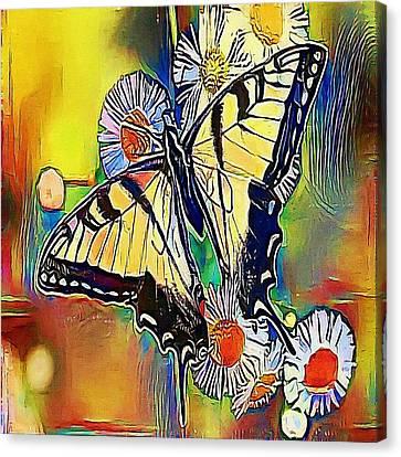 butterfly - My WWW vikinek-art.com Canvas Print by Viktor Lebeda