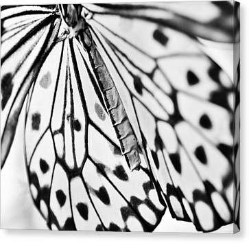Butterfly Wings - Black And White Canvas Print by Marianna Mills