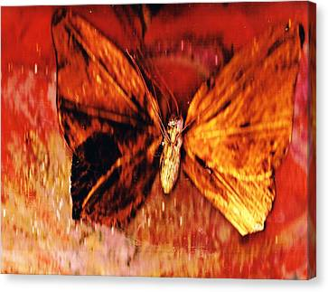 Butterfly With Dark Wing Canvas Print by Anne-Elizabeth Whiteway