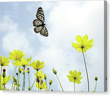 Butterfly In Motion Canvas Print - Butterfly With Flowers by Adegsm