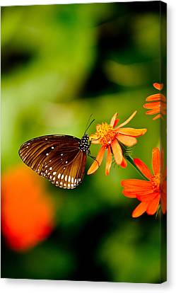 Butterfly With Orange Flowers Canvas Print