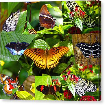 Butterfly Work 10 Canvas Print by David Lee Thompson
