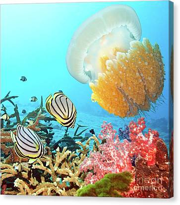 Butterflyfishes And Jellyfish Canvas Print by MotHaiBaPhoto Prints