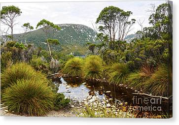 Button Grass At Dove Lake Canvas Print by Lexa Harpell