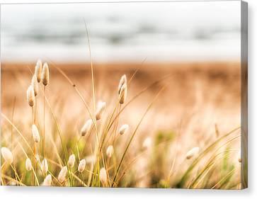 Button Grass Canvas Print