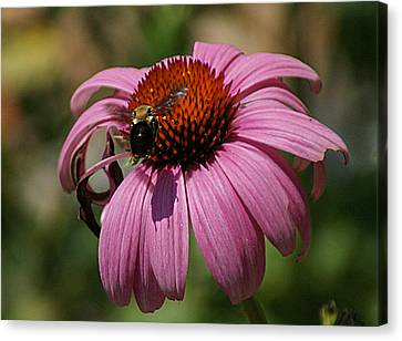 Buzzing Canvas Print by Rick Friedle