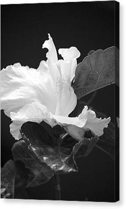 Bw Hibiscus Canvas Print by Bonita Hensley