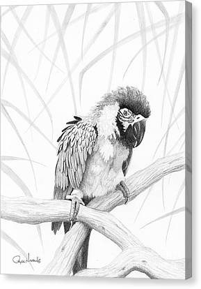 Bw Parrot Canvas Print by Phyllis Howard