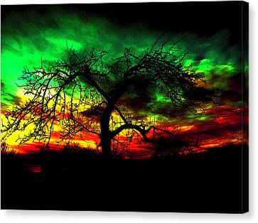 Dry Branches  Canvas Print by VRL Art