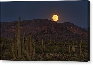 By The Light Of The Strawberry Moon  Canvas Print