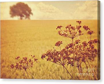 Canvas Print featuring the photograph By The Side Of The Wheat Field by Lyn Randle
