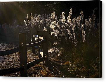 Canvas Print featuring the photograph By The Way by Steven Sparks