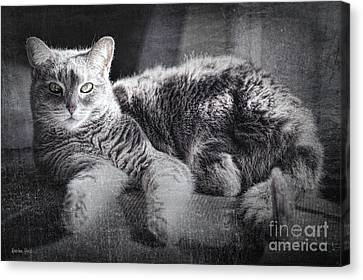 Attune Canvas Print - By The Window by Korrine Holt