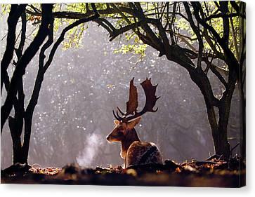 C-c-c-cold Breath - Fallow Deer Buck Canvas Print by Roeselien Raimond