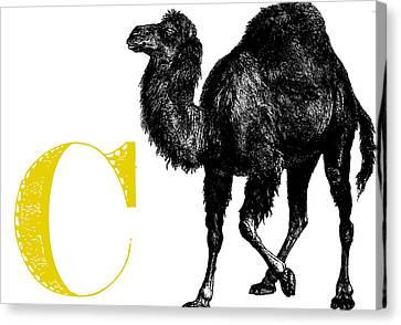 C Camel Canvas Print by Thomas Paul