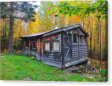Cabin In The Woods  Canvas Print by Catherine Reusch Daley