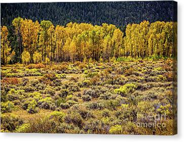Cache La Poudre River Colors Canvas Print by Jon Burch Photography